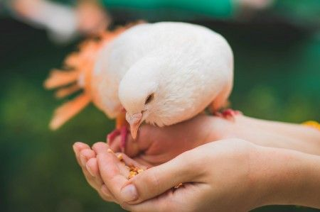 With Short-Term Goals, Go for a Bird in the Hand