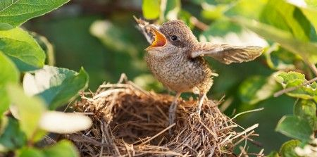 Flying the Coop: Planning for an Empty Nest