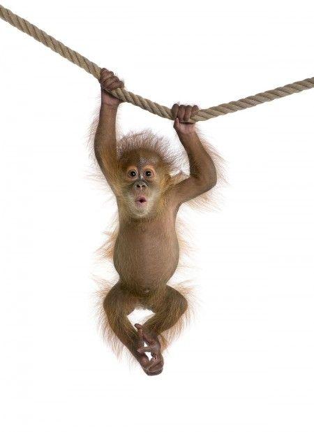 Quit Monkeying Around